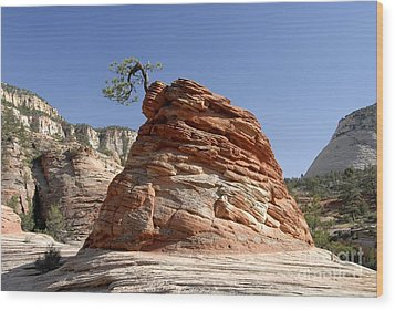 The Land Of Zion Wood Print by David Lee Thompson