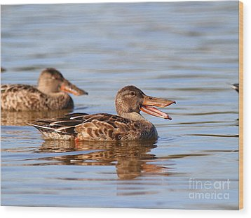 The Laughing Duck Wood Print by Wingsdomain Art and Photography