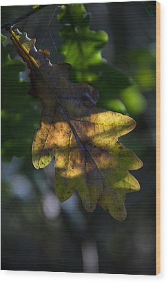 Wood Print featuring the photograph The Light Fell Softly by Odd Jeppesen