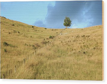 The Lines The Tree And The Hill Wood Print by Yoel Koskas