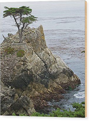 The Lone Cypress - California Wood Print by Brendan Reals