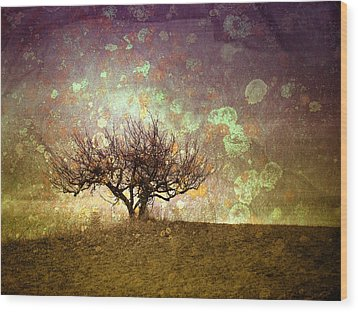 The Lone Tree Wood Print by Tara Turner