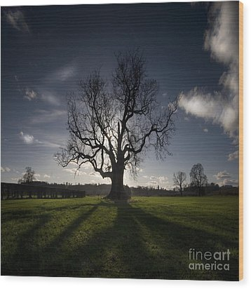 The Lonely Tree Wood Print by Angel  Tarantella