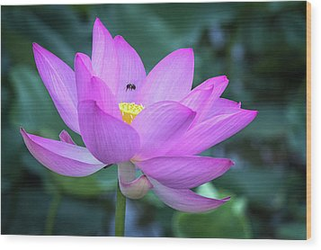 The Lotus And The Bee Wood Print