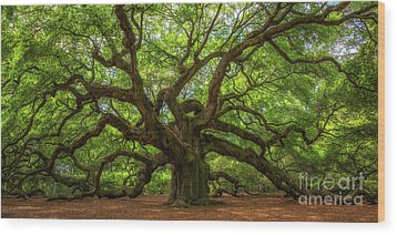 The Magical Angel Oak Tree Panorama  Wood Print by Michael Ver Sprill