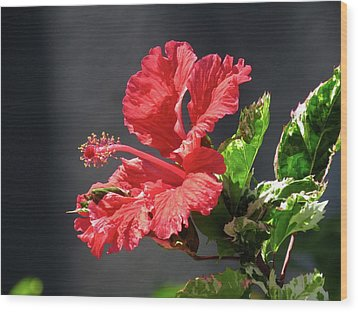 The Mallow Hibiscus Wood Print