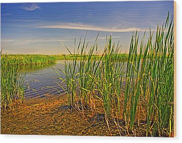 The Marshes Of Brazoria Wood Print