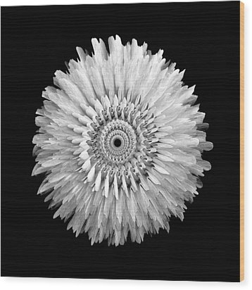 The Monochromatic Mandala Of Rose Wood Print by Jacqueline Migell
