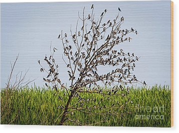 Wood Print featuring the photograph The More The Merrier- Tree Swallows  by Ricky L Jones