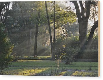 The Morning Sunlight Comes Shining Through Wood Print