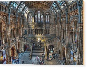 The Natural History Museum London Uk Wood Print by Donald Davis