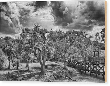 The Nest Wood Print by Howard Salmon