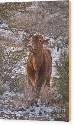 Wood Print featuring the photograph The New Years Cow by Donna Greene
