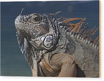 The Night Of The Iguana Wood Print