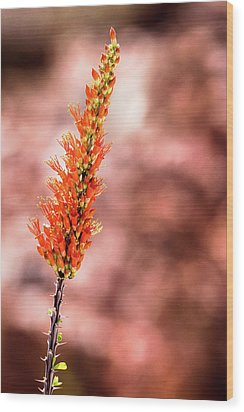 Wood Print featuring the photograph The Ocotillo by Onyonet  Photo Studios