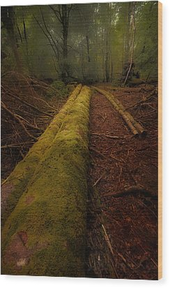 The Old Mossy Trunk Wood Print