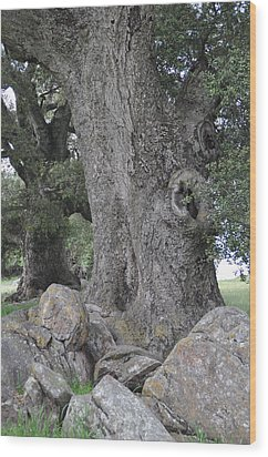 The Old Oak Wood Print