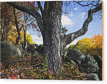 The Old Oak Tree Wood Print by Jim  Calarese