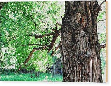 The Old Tree Wood Print
