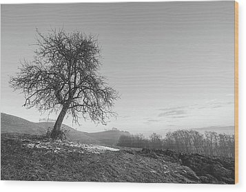 Wood Print featuring the photograph The One by Davorin Mance