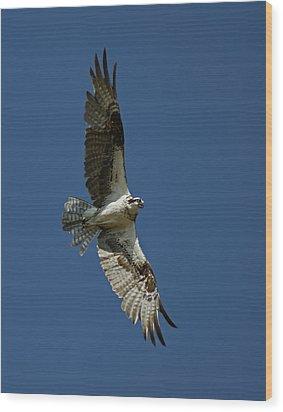 The Osprey Wood Print by Ernie Echols