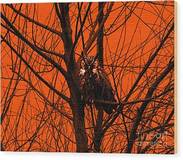 The Owl . Orange Wood Print by Wingsdomain Art and Photography