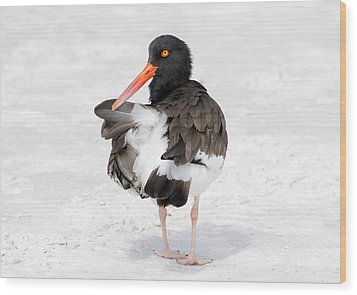 Wood Print featuring the photograph The Oystercatcher by Phil Stone