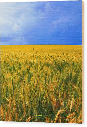 The Palouse Wheat Fields Wood Print