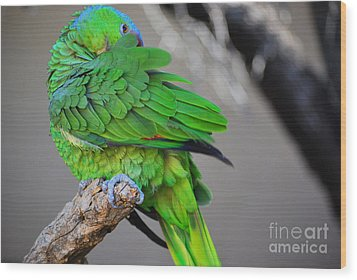 Wood Print featuring the photograph The Parrot by Donna Greene