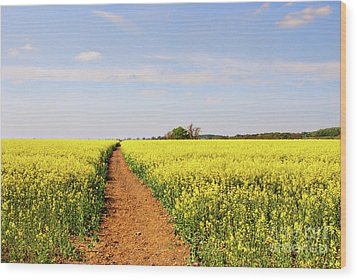 The Path To Bosworth Field Wood Print by John Edwards