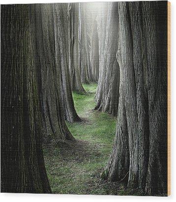 The Pathway Wood Print by Ian David Soar