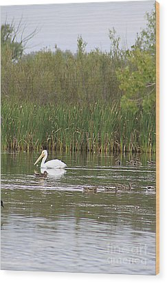 Wood Print featuring the photograph The Pelican And The Ducklings by Alyce Taylor