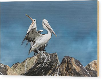 The Pelicans Wood Print by Racheal Christian