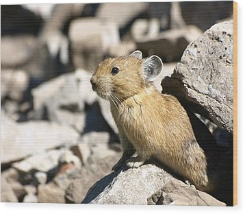 Wood Print featuring the photograph The Pika by DeeLon Merritt