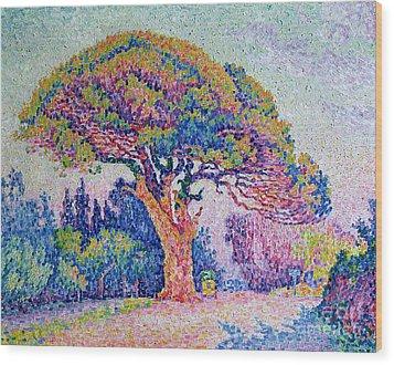The Pine Tree At Saint Tropez Wood Print by Paul Signac