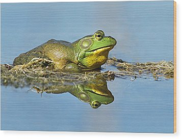 The Pond King Wood Print by Mircea Costina Photography