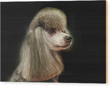 The Poodle Is A Breed Of Dog, One Of The Most Common Breeds In The Present. Wood Print