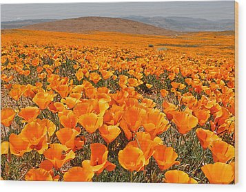 The Poppy Fields - Antelope Valley Wood Print by Peter Tellone