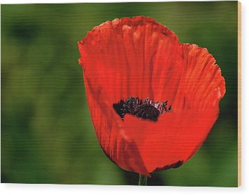 Wood Print featuring the photograph The Poppy Next Door by Onyonet  Photo Studios