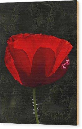 The Poppy Wood Print by Svetlana Sewell