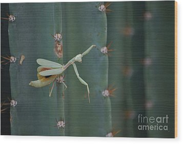 Wood Print featuring the photograph The Praying Mantis by Donna Greene