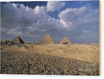 The Pyramids At Giza Wood Print by Sami Sarkis