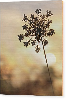 Wood Print featuring the photograph The Queen At Sunrise by Lori Deiter