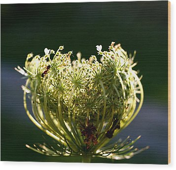 The Queen Wood Print by Diane Merkle