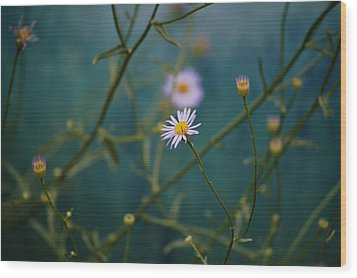 Wood Print featuring the photograph The Quiet Aster by Douglas MooreZart