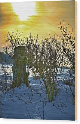 The Rabbit Trail Wood Print by Robert Pearson
