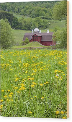 Wood Print featuring the photograph The Red Barn And Dandelions by Paula Porterfield-Izzo
