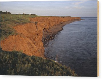 The Red Cliffs Of Prince Edward Island Wood Print by Taylor S. Kennedy