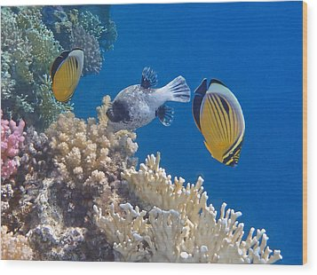 The Red Sea Underwater World Wood Print
