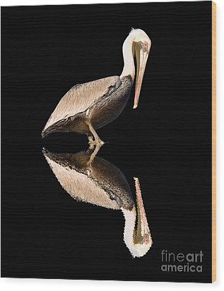 The Reflection Of A Pelican Wood Print